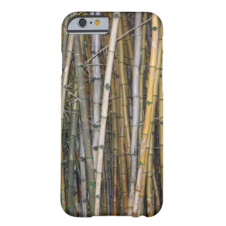 Bamboo in Hilo, Hawaii Barely There iPhone 6 Case