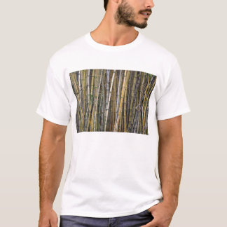 Bamboo in Hilo, Hawaii T-Shirt