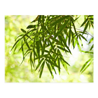 Bamboo leaves postcard