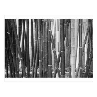 Bamboo Postcard