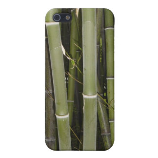 Bamboo stalks iPhone 5/5S cases