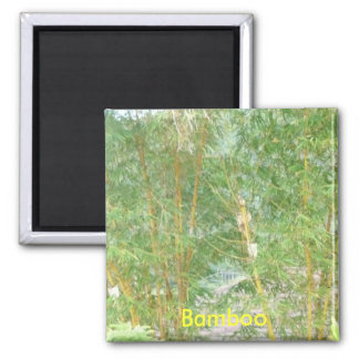 Bamboo trees, Bamboo magnet
