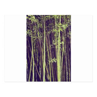 Bamboo trees postcard