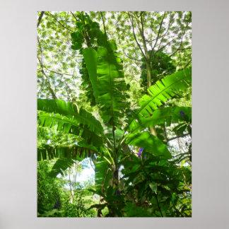 Banana beneath Jungle Canopy Poster