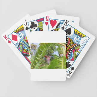 Banana plantation in Sok Kwu Wan Lamma Island Bicycle Playing Cards