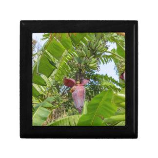 Banana plantation in Sok Kwu Wan Lamma Island Gift Box
