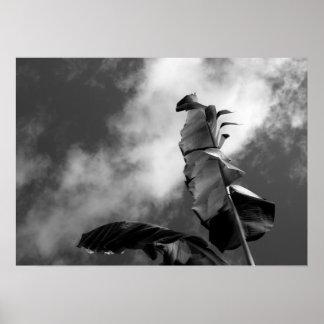 Banana Tree Leaves Black & White Art Photograph Poster