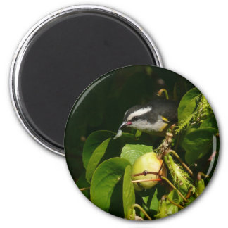 Bananaquit Bird Eating Tropical Nature Photography 2 Inch Round Magnet