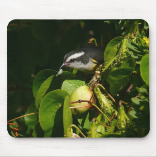 Bananaquit Bird Eating Tropical Nature Photography Mouse Pad