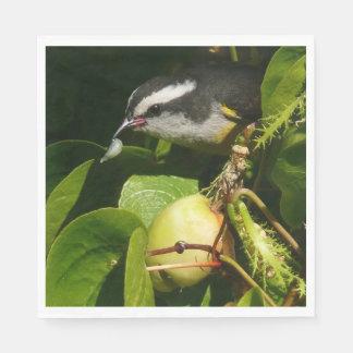 Bananaquit Bird Eating Tropical Nature Photography Paper Napkin