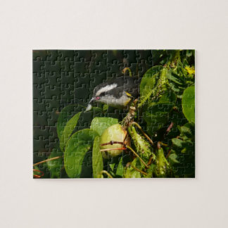 Bananaquit Bird Eating Tropical Nature Photography Puzzles