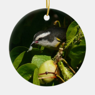 Bananaquit Bird Eating Tropical Nature Photography Round Ceramic Ornament