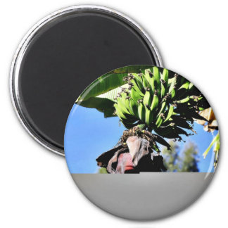 Bananas Fruit Magnet