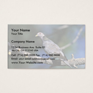 Band-tailed Pigeon Business Card
