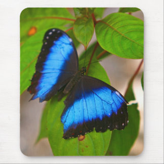 Banded Morpho Butterfly Mouse Pad