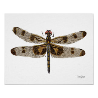 Banded Pennant Dragonfly Art Poster