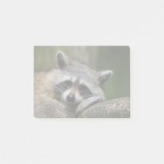 Bandit at Rest Cute Raccoon Post-it Notes