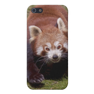 Bandit iPhone 4 Speck Case iPhone 5 Cover