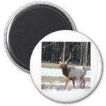 Banff Elk Magnet