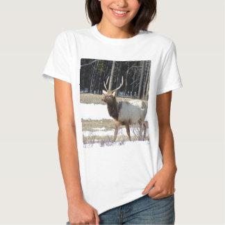 Banff Elk T-shirt