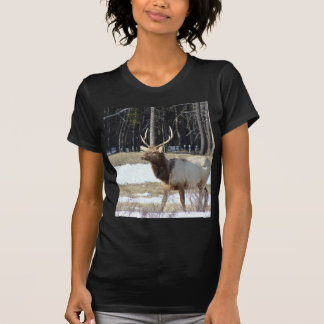 Banff Elk T Shirt