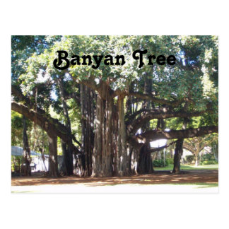 Banyan Tree Postcard