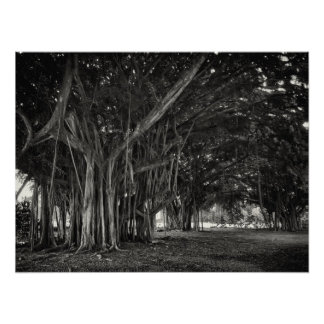 BANYAN TREE ROOT STRUCTURE POSTER