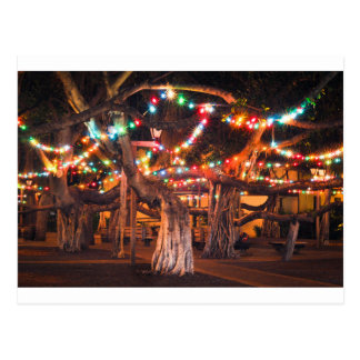 Banyan Tree with Holiday Lights Postcard