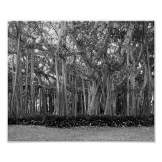 Banyan Trees Black And White Photograph Poster