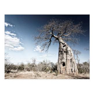 Baobab Tree at Mana Pools National Park, Zimbabwe Postcard