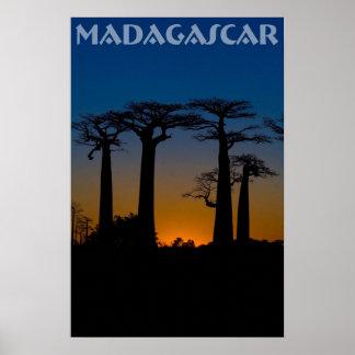 Baobab trees of Madagascar Poster