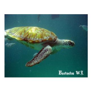 Barbados W.I. Postcard