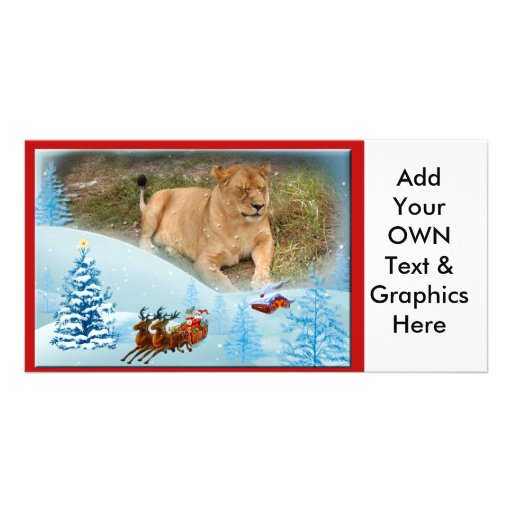 Barbary Lion-Nap-c-10 copy Picture Card