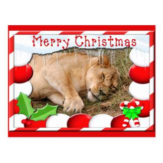 Barbary Lion-Nap-c-150 copy Postcard