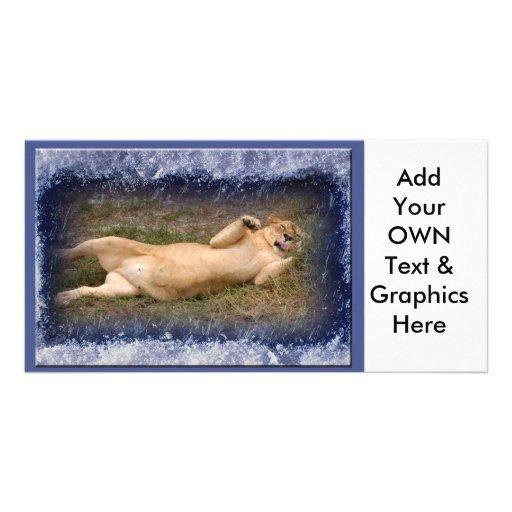 Barbary Lion-Nap-c-31 copy Photo Card