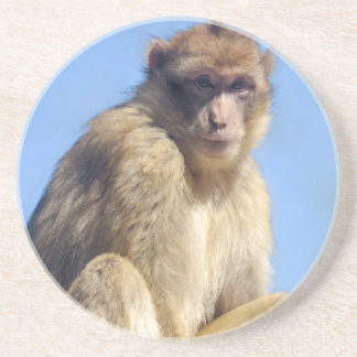 Barbary macaque sitting coaster