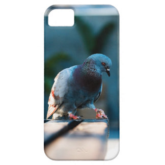 Barcelona dove iPhone 5 covers