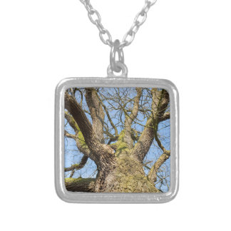 Bare leafless oak tree bottom view with blue sky i silver plated necklace