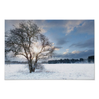 Bare tree in a snow field with early sunrise poster