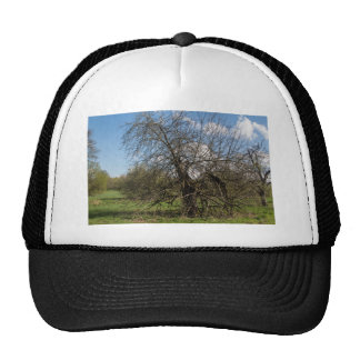bare tree trucker hat