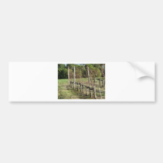 Bare vineyard field in winter . Tuscany, Italy Bumper Sticker