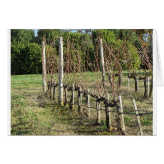 Bare vineyard field in winter . Tuscany, Italy Card
