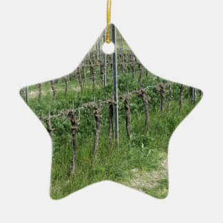 Bare vineyard field in winter . Tuscany, Italy Ceramic Ornament