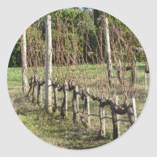 Bare vineyard field in winter . Tuscany, Italy Classic Round Sticker