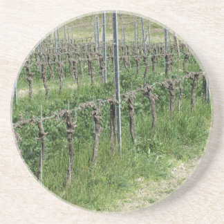Bare vineyard field in winter . Tuscany, Italy Coaster