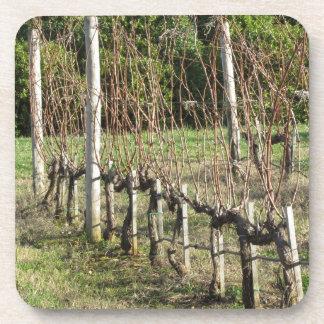 Bare vineyard field in winter . Tuscany, Italy Coaster
