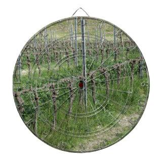Bare vineyard field in winter . Tuscany, Italy Dartboard