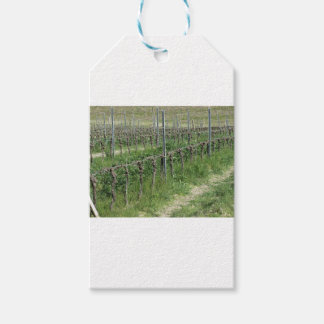 Bare vineyard field in winter . Tuscany, Italy Gift Tags