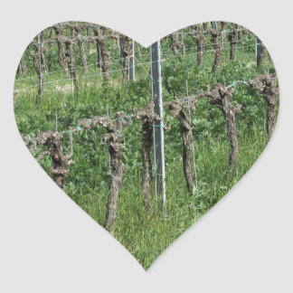 Bare vineyard field in winter . Tuscany, Italy Heart Sticker