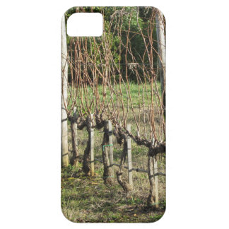 Bare vineyard field in winter . Tuscany, Italy iPhone 5 Case